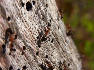 ant control manhattan beach ca
