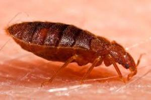 bed bug control manhattan beach ca