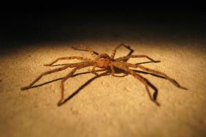 spider control manhattan beach ca