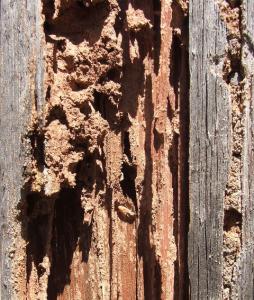 termite control manhattan beach
