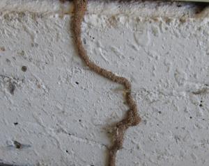 termite control manhattan beach ca
