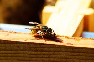 wasp control manhattan beach ca